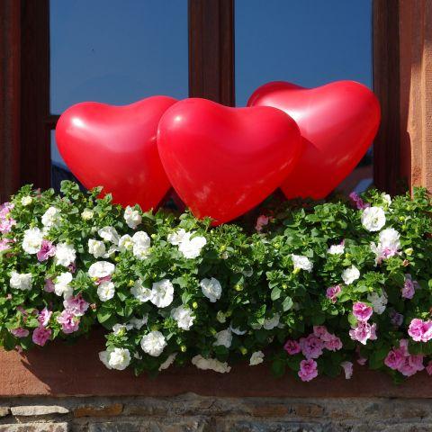 Herzballons im Blumenkasten dekoriert. Einfach mit Drahthalter in die Erde gesteckt.