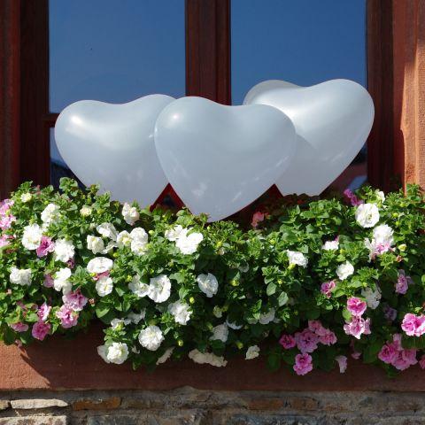 Weiße Herzballons im Blumenkasten zwischen den Blumen.